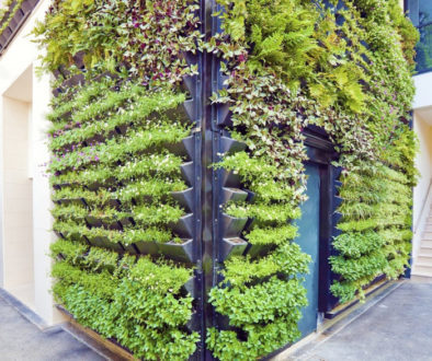projektowanie ogrodów wertykalnych