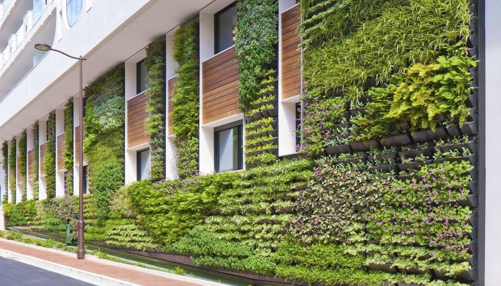 zielona ściana pielęgnacja